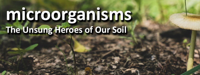 microorganisms The Unsung Heroes of Our Soil